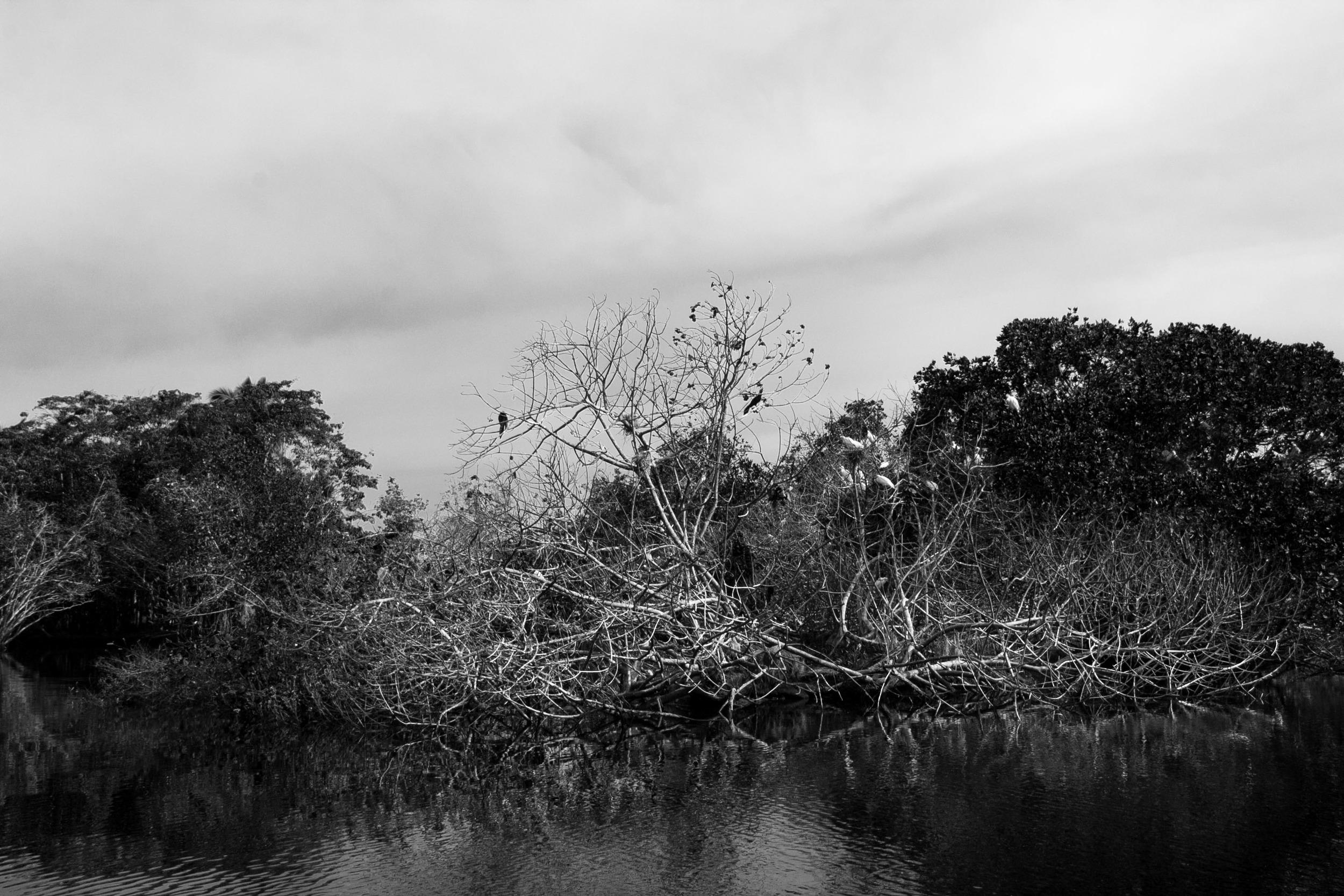 """""""Raíces profundas"""" Esta foto la tomé en Ventanillas, Oaxaca, me lleva a reflexionar ante la necesidad que tiene nuestro espíritu para generar raíces profundas. El tamaño exterior de un árbol es directamente proporcional al tamaño de sus raíces dentro de la tierra.  Foto. AlasdeOrquidea"""