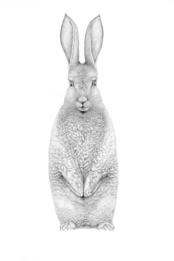 rabbit small edit.jpg