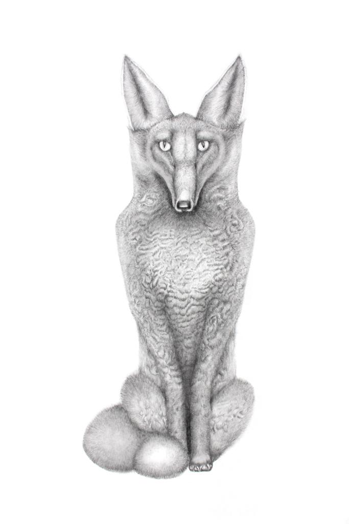 foxsmall.jpg