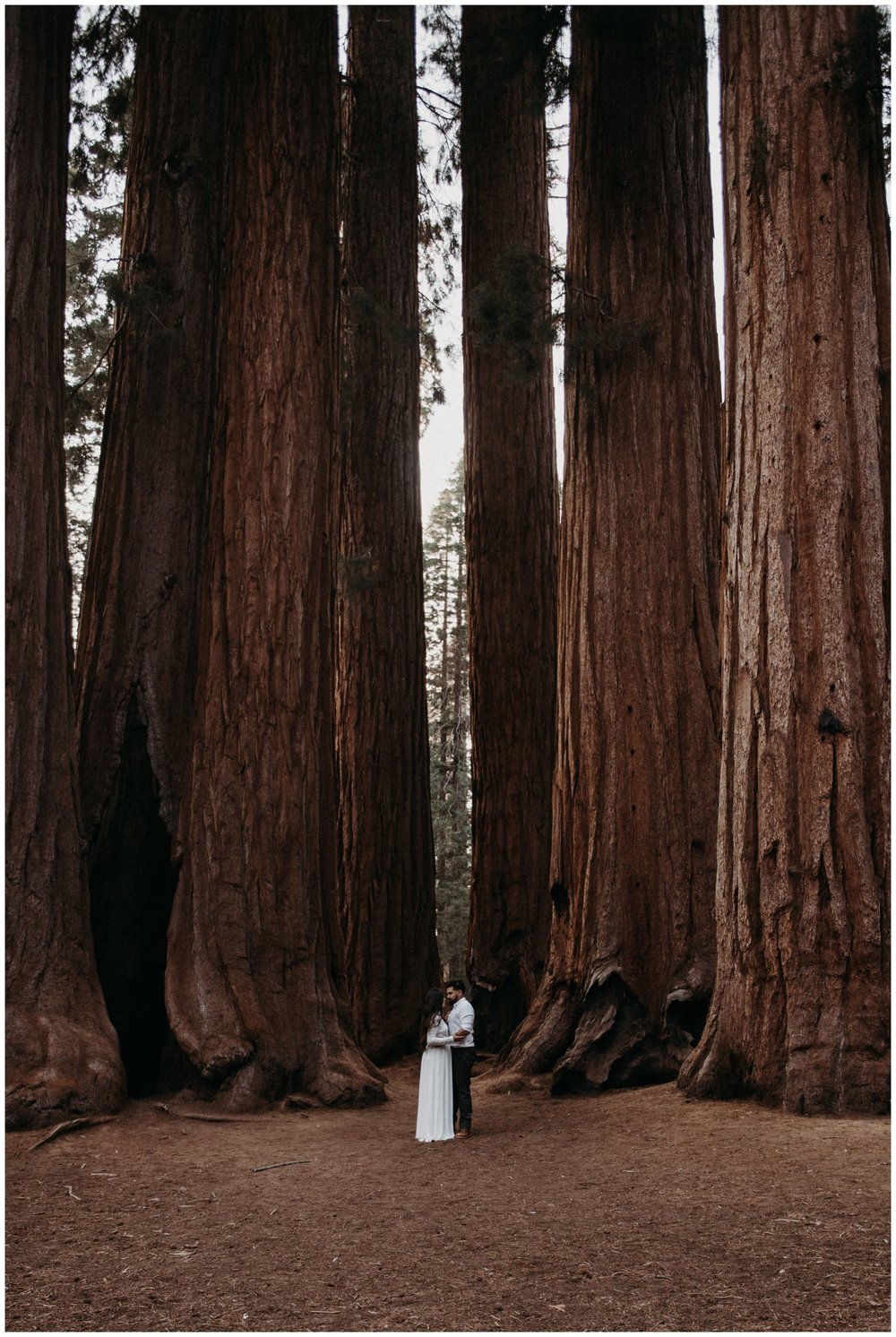 Sequoia_National_Park_Engagement__0020.jpg