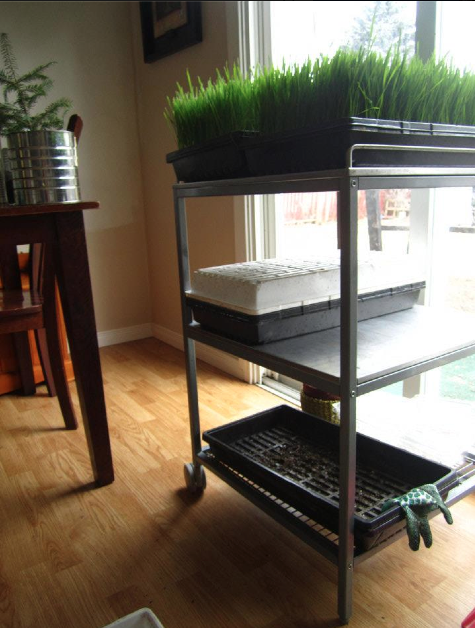 You can even sprout in VERY small kitchens!