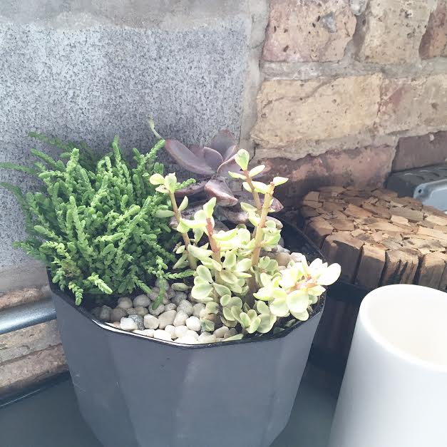 Chicago Roof Deck + Garden Design Studio Succulents