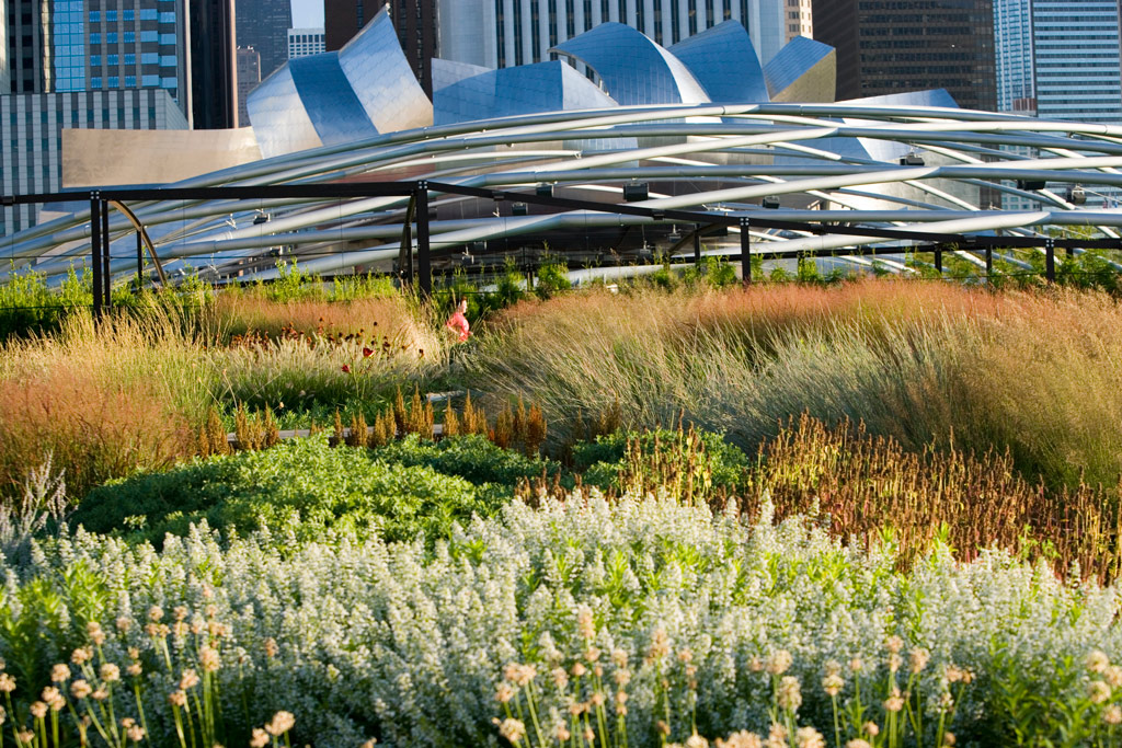The Lurie Garden is a perfect microcosm of an American prairie right in the heart of downtown Chicago