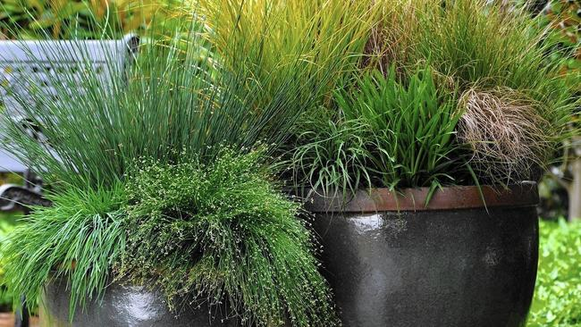 Grasses are great for annual containers as there are countless varieties