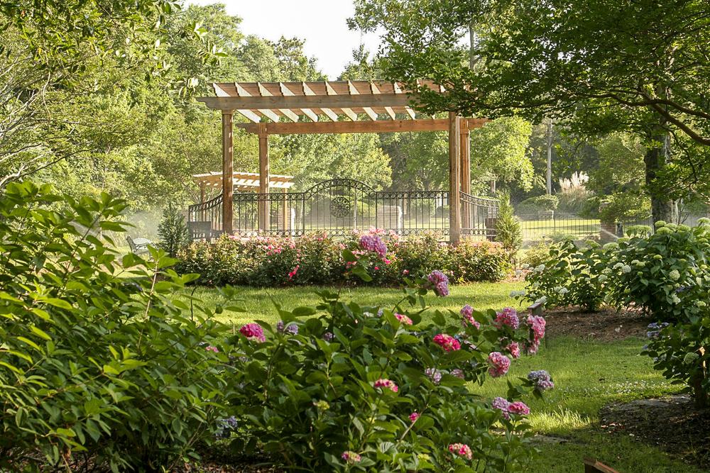 Hydrangea Pendleton King Park