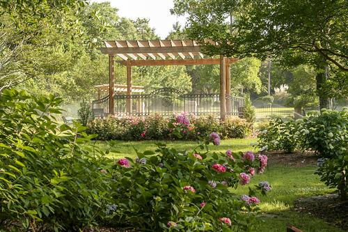Hydrangea — Pendleton King Park