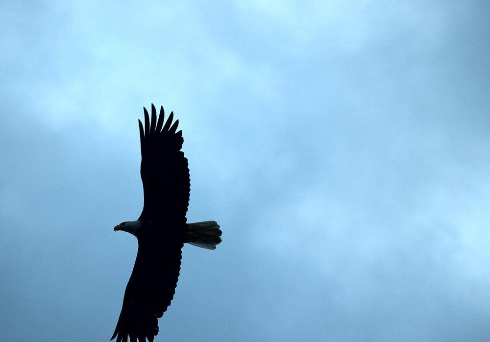 160719_CA_eagle_geg.jpg