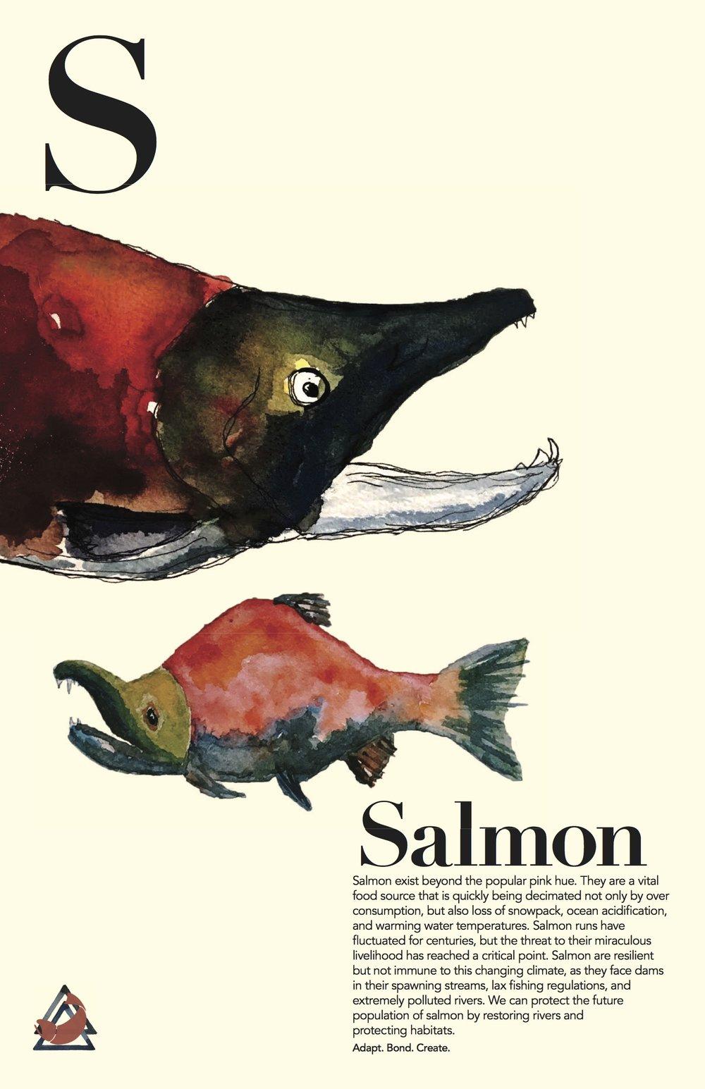 Salmon_final.jpg