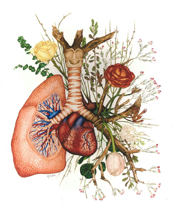 Branching Anatomical Watercolor Painting of Lung and Heart with Flowers - Giclee Print $22+
