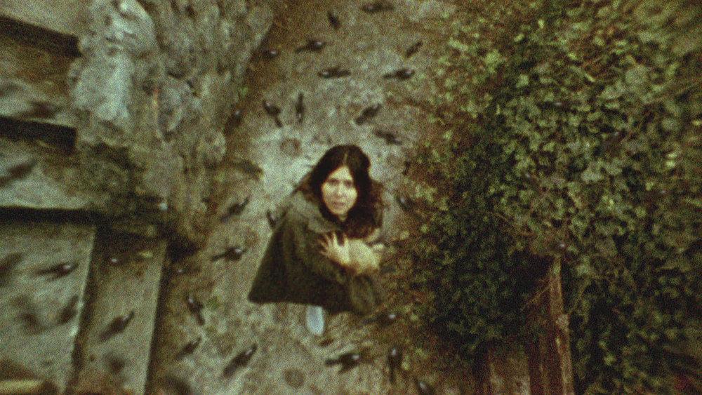 1974 raining birds.jpg