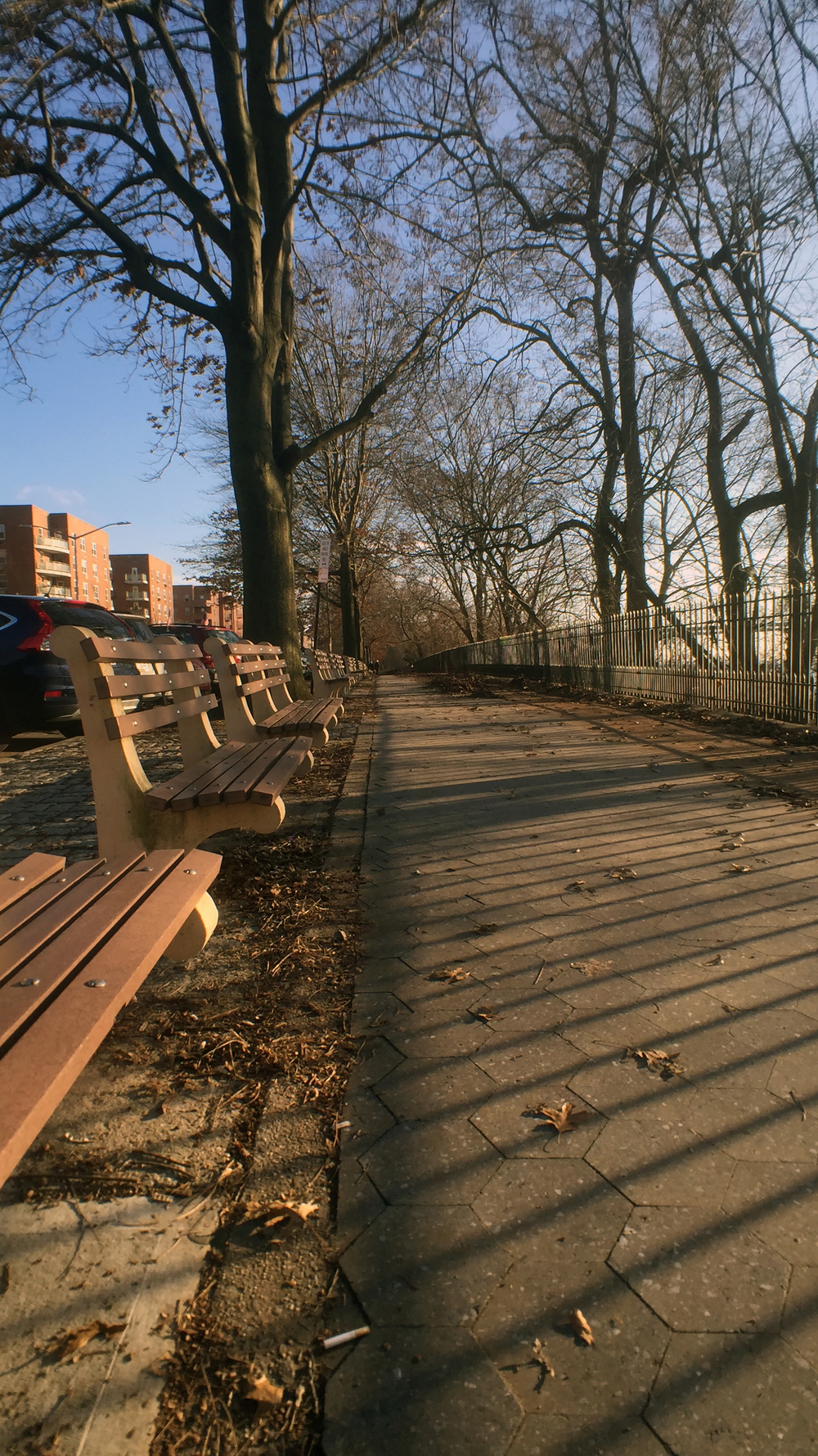 Shore Road's benches in the afternoon winter's sunlight - January 2, 2016