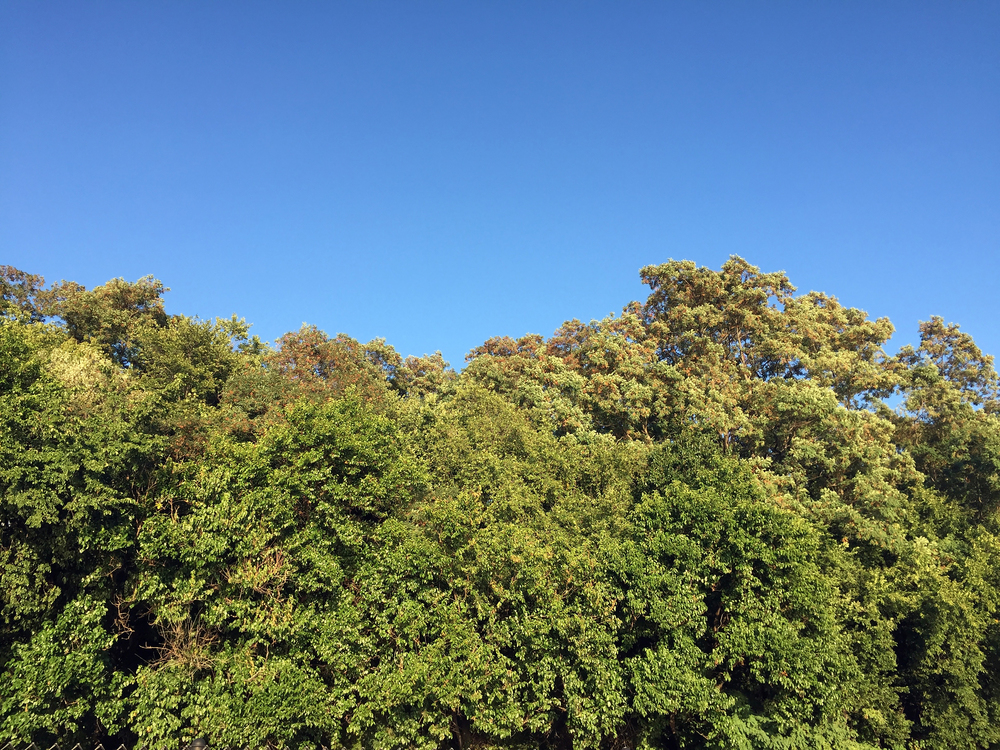 Trees meet sky late in the day towards the end of summer - August 28, 2015
