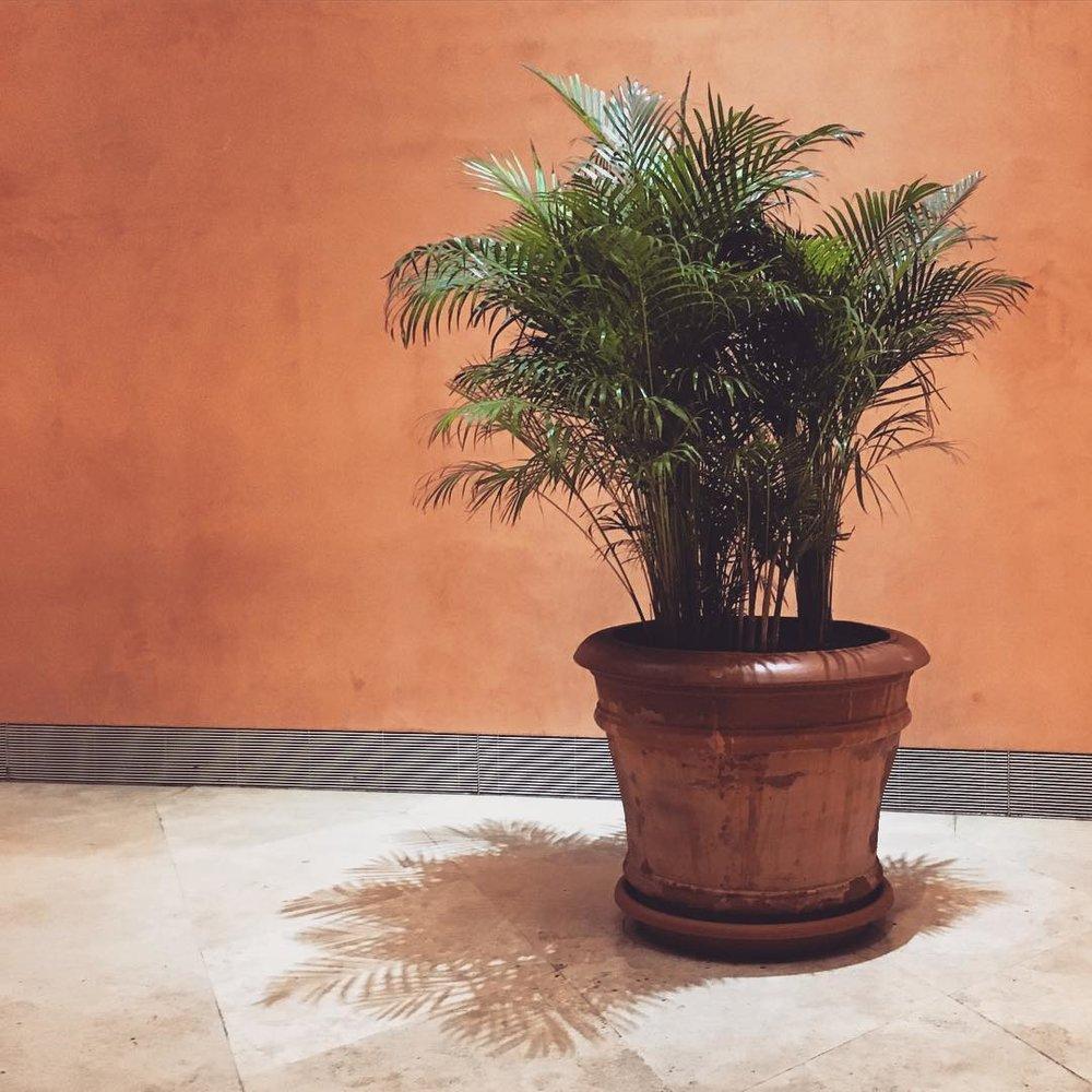 plant gram.jpg