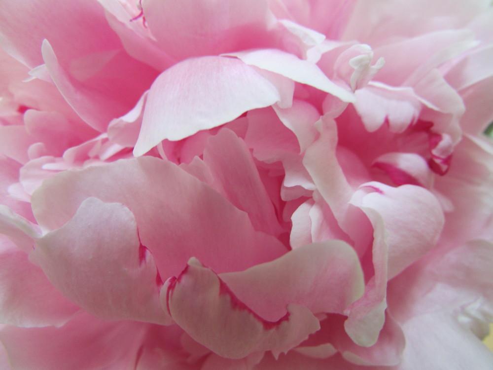 May flowers 001.JPG