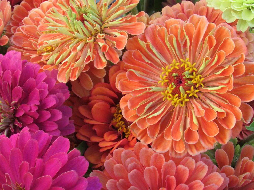 August 2013 flowers 009.jpg
