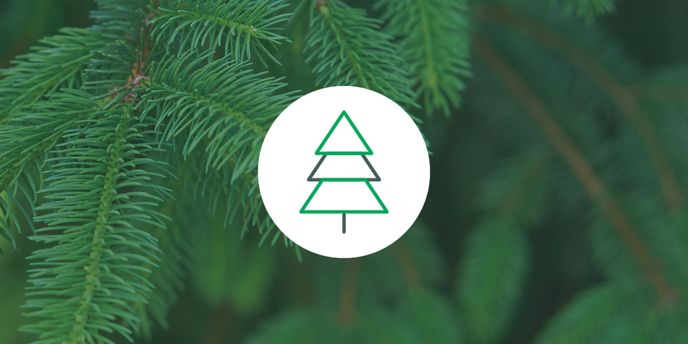 Pinene SMELL Pine (also found in pine needles, rosemary, basil, parsley, dill) EFFECTS Alertness, memory retention, counteracts some THC effects MEDICAL USES Asthma, antiseptic