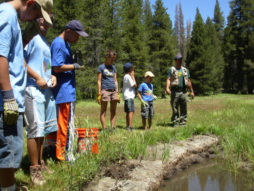 WildPlaces' volunteers conduct meadow restoration projects throughout the southern Sierra headwaters.