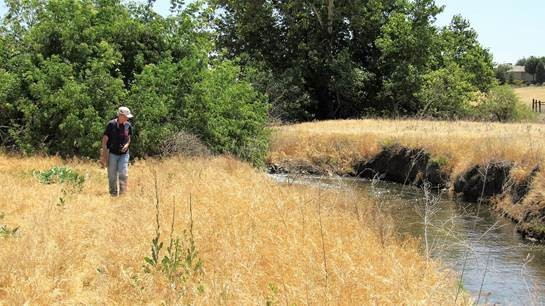 Biological survey revealed myriad of plant and animal species dependent on the water the escaped the irrigation and percolated into the sandy soil of this piece of the Tule River watershed and flood plain.