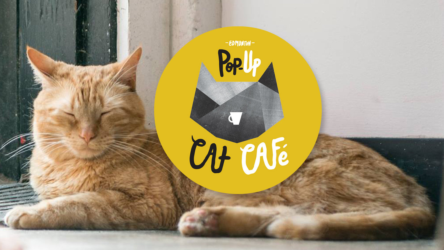 Edmonton Pop-Up Cat Cafe
