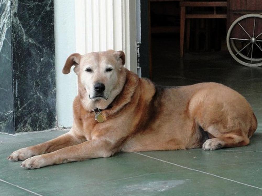 Roxie (RIP)