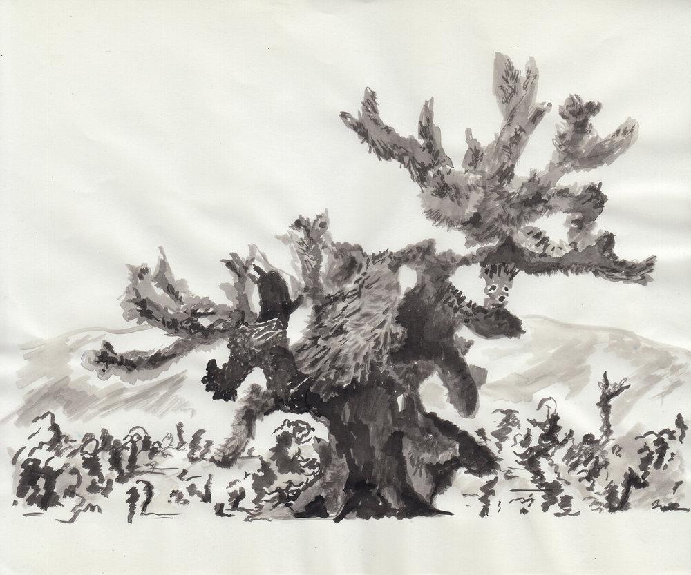Joshua Tree study