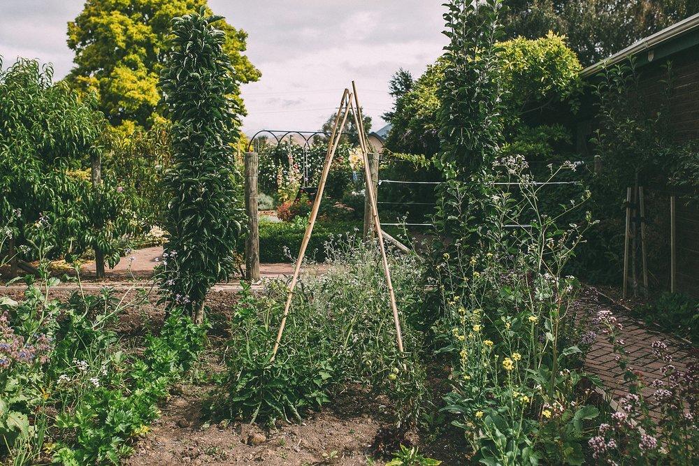 Pollard Park Vegetable Garden