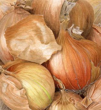 Onion-squarejpeg.jpg