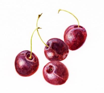 cherries2015.jpeg