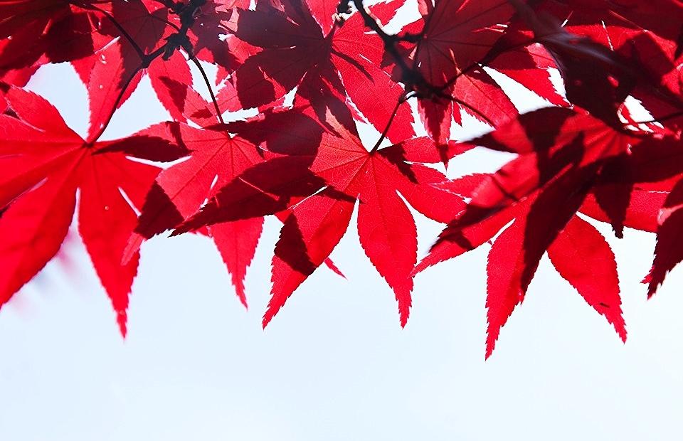 autumn-1006880_960_720.jpg