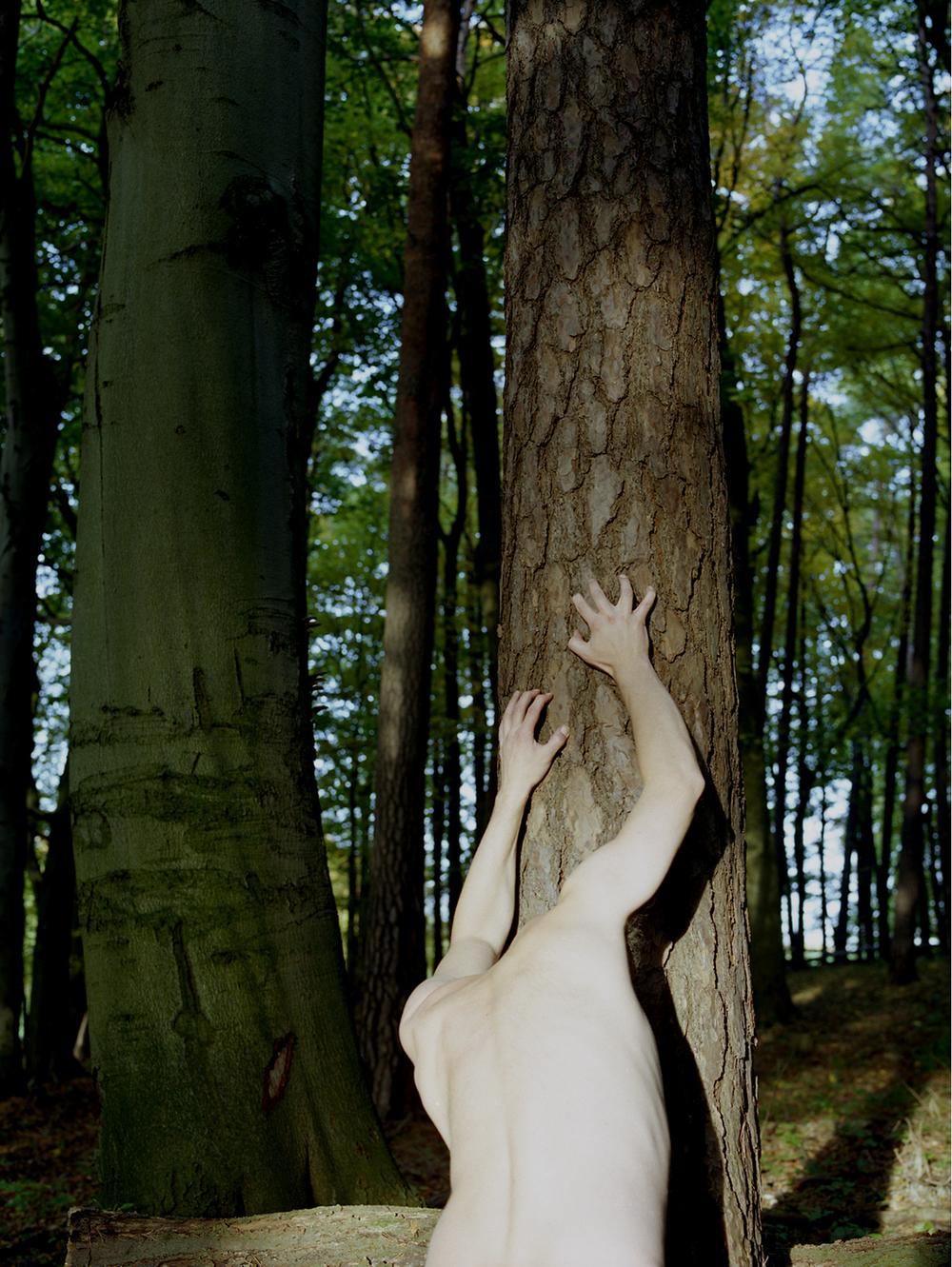 Metamorphosis 1, Der Baummensch, 2012