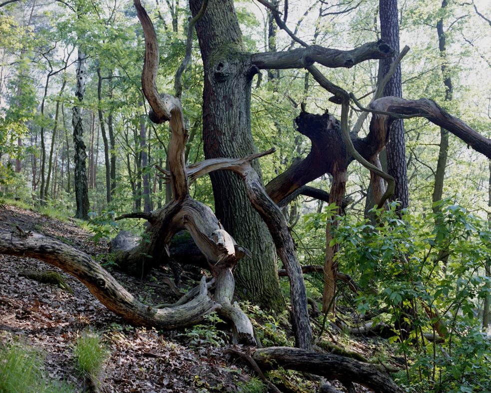 Metamorphosis 3, Der Sterbende Baum, 2012