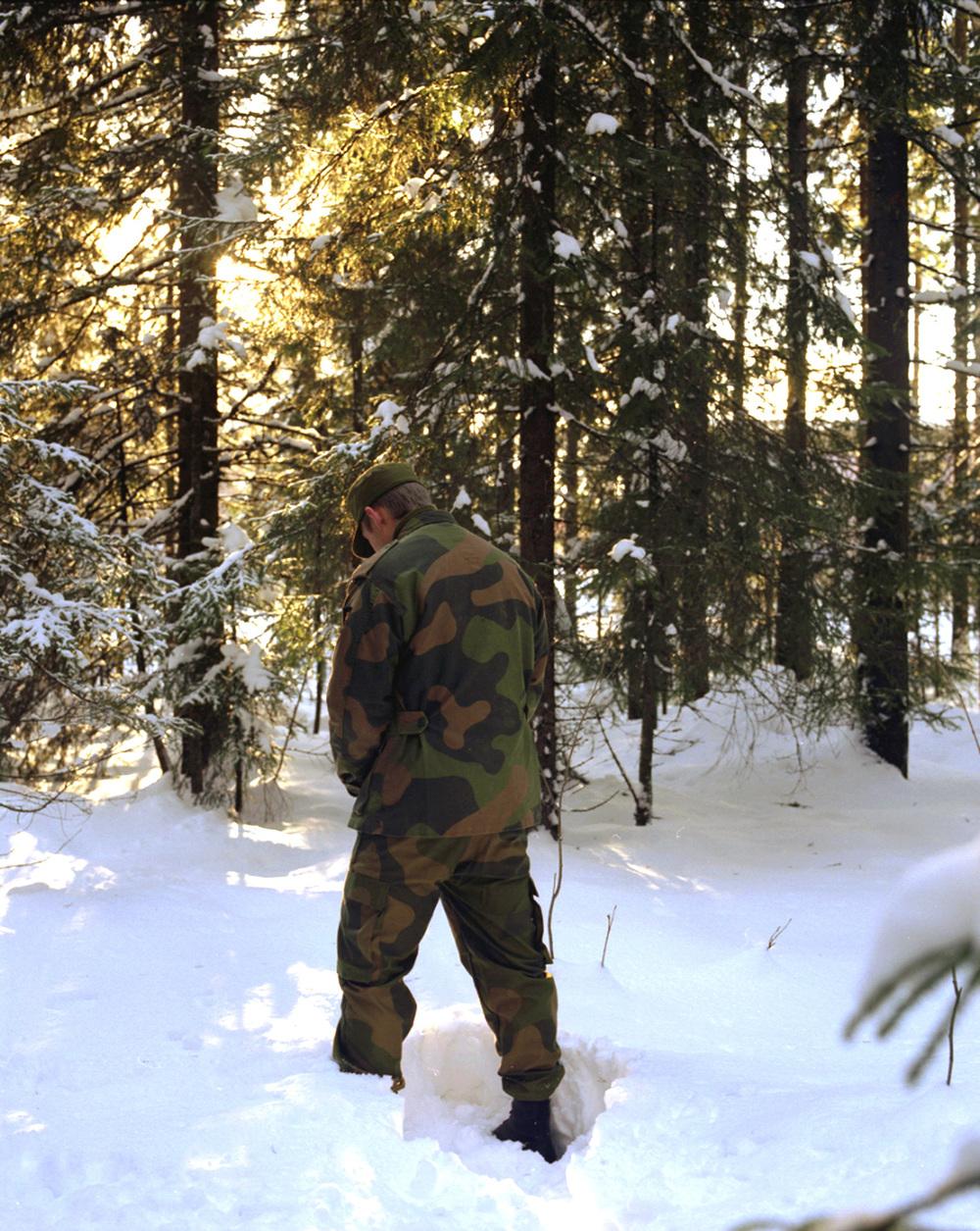 Forest Scene, 2006