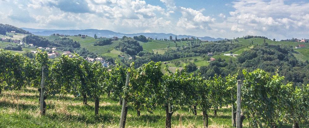 Ratsch an der südsteirischen Weinstraße - Blick vom Weingut Gross