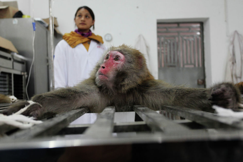 Experimental Monkeys Made in China - 2nd Place