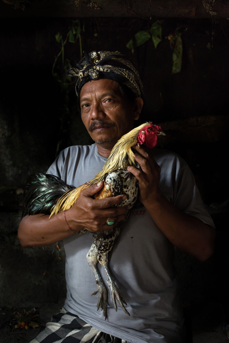 Balinese Cock-Fighters - 3rd Place