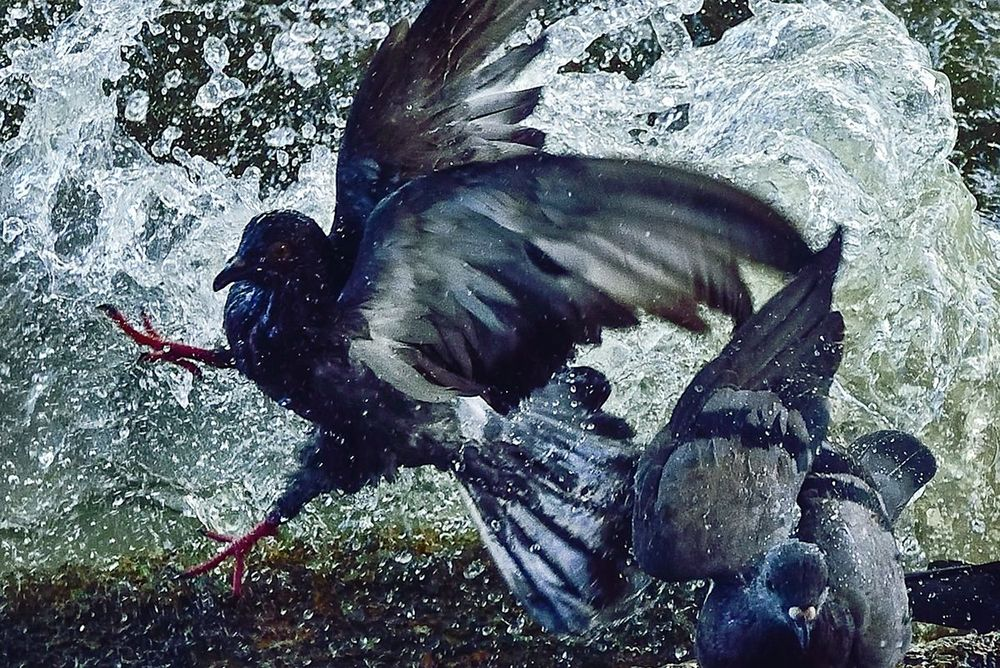 Splashing Birds - Winner