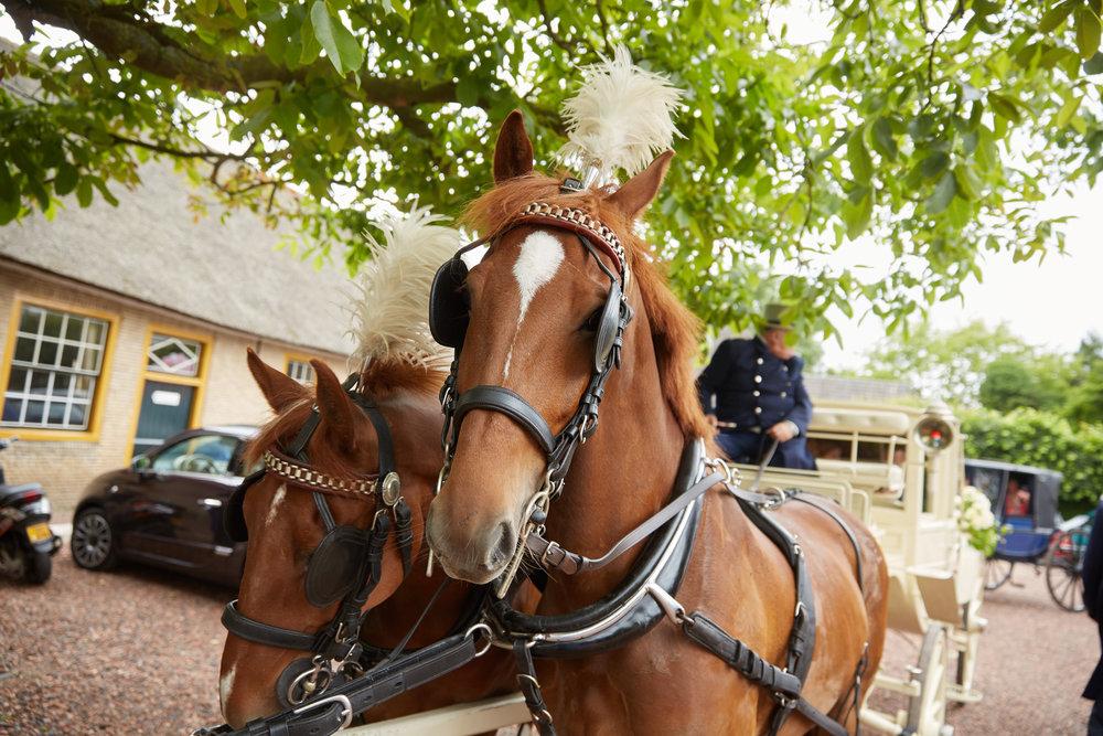 trouwshoot-bruidsfotografie-trouwfoto-feestfotografie-Trudy-Ron-60.jpg
