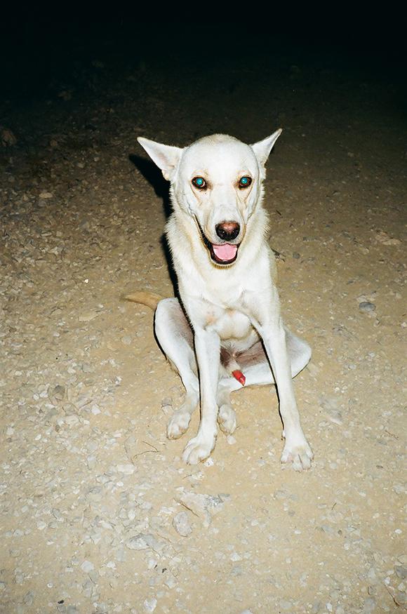 16.7.17 - DOG