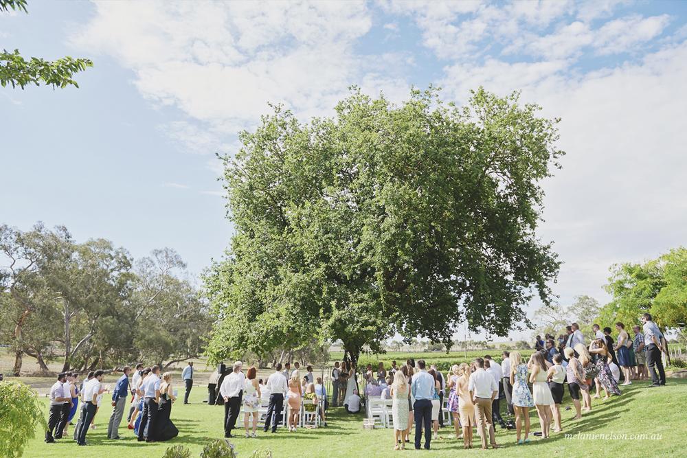 howard vineyard wedding