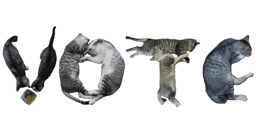 VoteCats for A2Votes.jpg