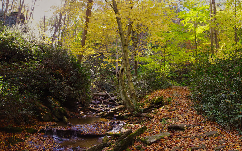 Panoramic view of Mill Creek flowing next to the Mason Dixon Trail. Truly beautiful Autumn scenery in October.