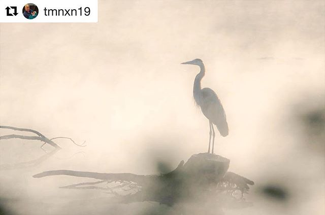 #Repost lovely shit by @tmnxn19! Thanks for sharing with us on the #grandlancaster tag! ・・・ #feather_perfection #bestbirdshots #trb_rural #trb_nature #trb_country #bpa_rural #bpa_nature #rustic_wonders #country_features #todaysbestshot #ipulledoverforthis #pixnpieces #style_and_decay #backroad_visions #kings_alltags #usa_naturehippys #lancastergram #lancasteronline #localslovelancaster #onlyinlancaster #discoverlancaster