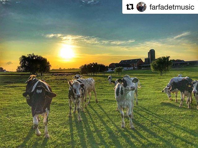 #Repost @farfadetmusic with a great countryside capture. Thanks for tagging #grandlancaster ・・・ Nice meeting at the end of the weekend.. they came close to the cam like to tell a story or just, to be in the story ✨🐮🐄💫- #pennlive #pennsylvania #lititzpa #lititz #mylancastercounty #cows #farm #mood #nature #sunset #endoftheweekend