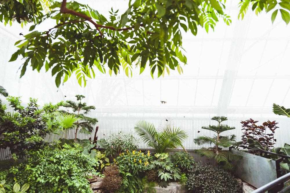 papillons-papillons en liberté-envolée papillons-jardin botanique-activités montreal-what to do in montreal-mtl best things-activités montréal- tourisme montréal-montreal tourism-montreal 375-best of montreal