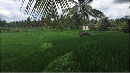 bali-what to do it bali- travel guide bali- first time in bali- must in bali-rice fields bali-ubud bali-seminyak bali-canggu bali