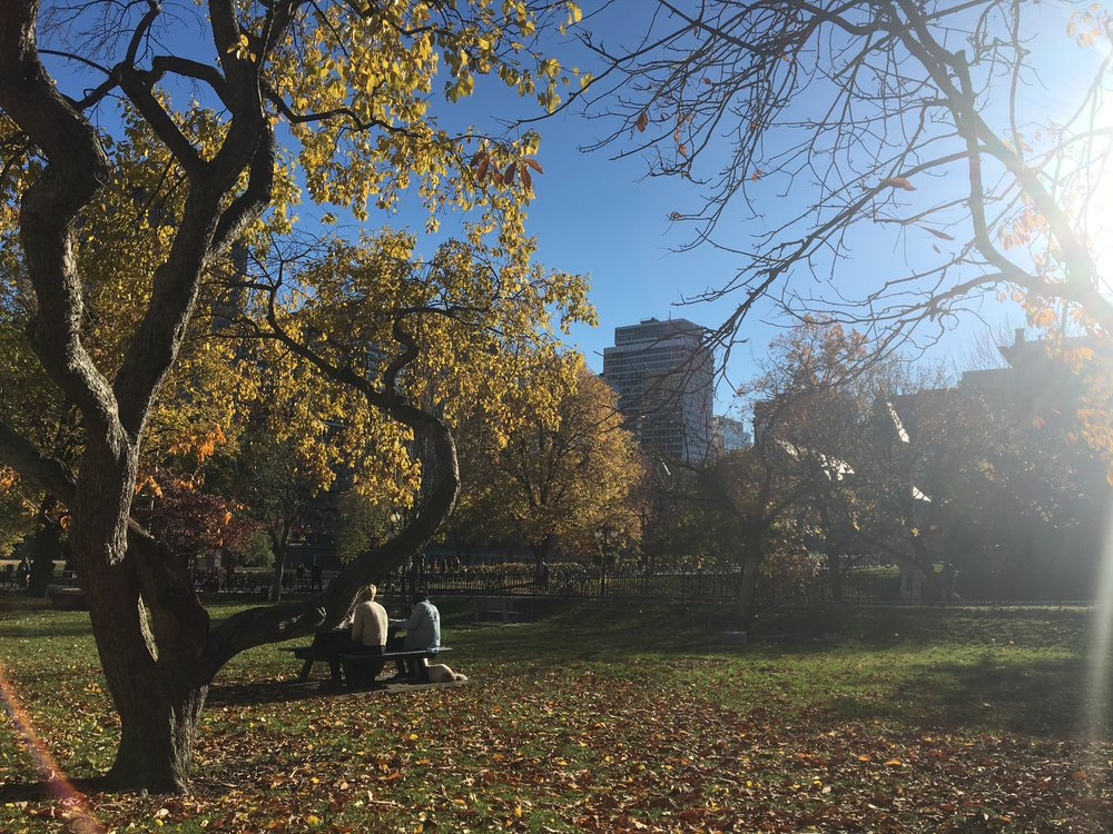 McGill University campus Photo Credit : Gabriella Hachem