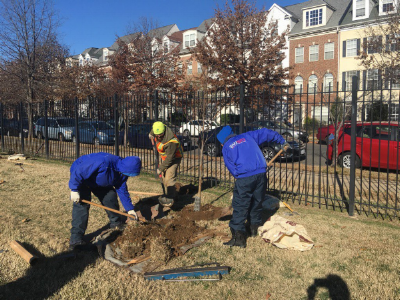 The SWBID Team planting trees in Southwest DC