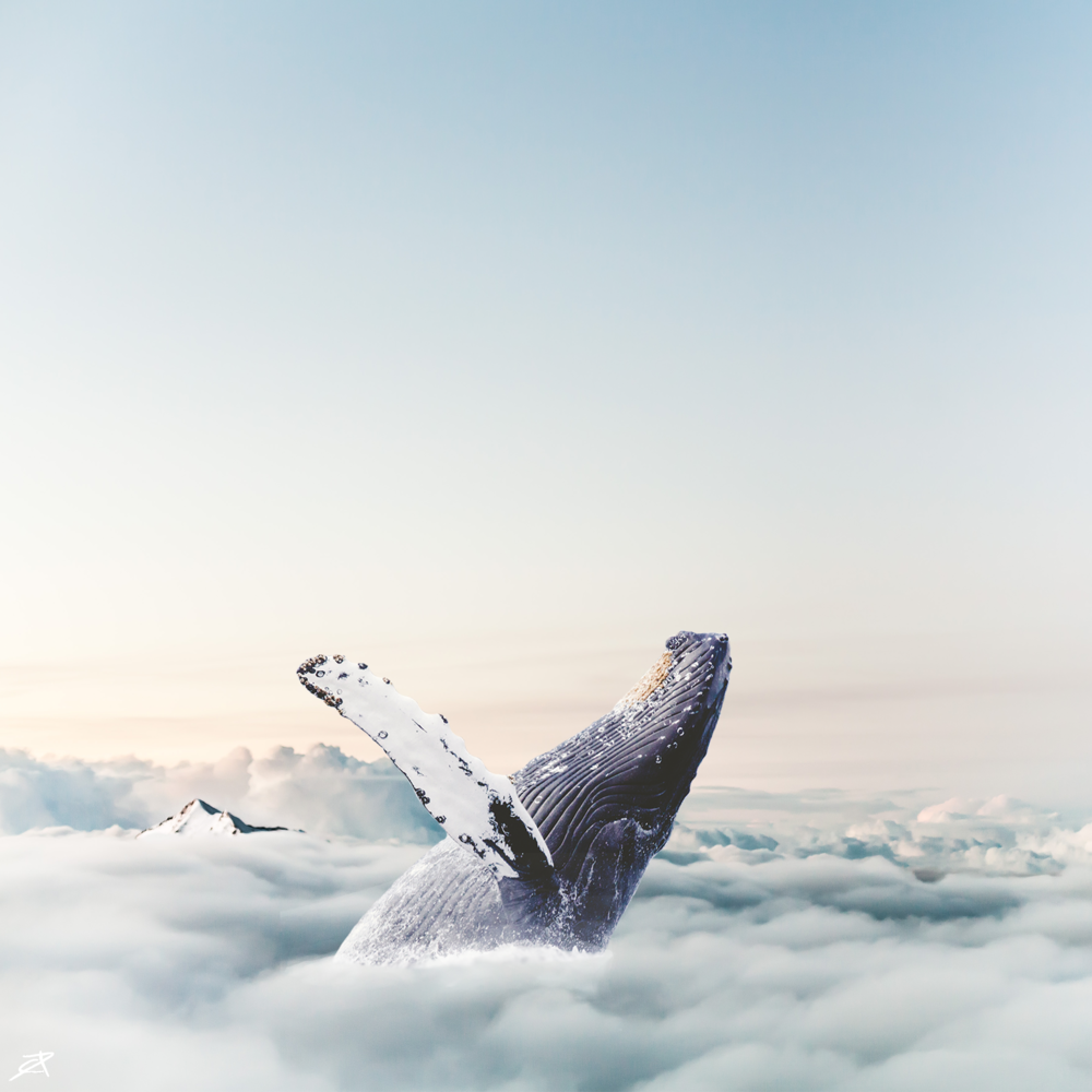 2000 Cloud Whale.png