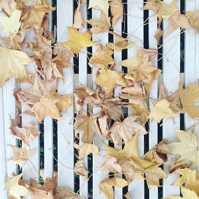 🌬🍁 . . .  #autum #buenosaires #texture #inspiration #inspo #may #maytheforcebewithyou  #taurus
