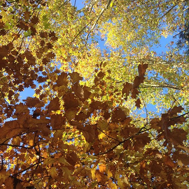 🍂💙 #perfectsky #autumn #buenosaires  #autumnpalette
